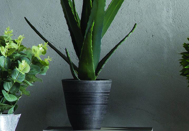 Image 2: Faux Aloe